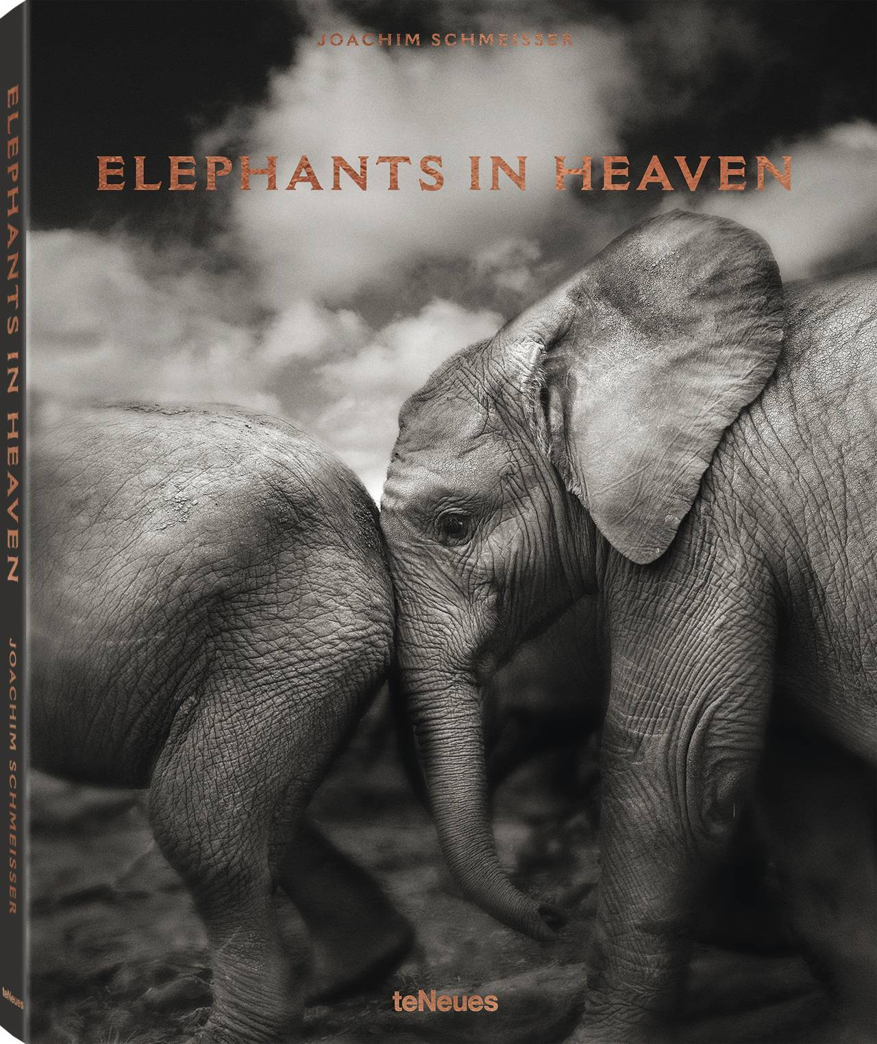 © Elephants in Heaven by Joachim Schmeisser, published by teNeues, www.teneues.com, Suguta, Kenya 2009, Photo © 2017 Joachim Schmeisser. All rights reserved. www.joachimschmeisser.com
