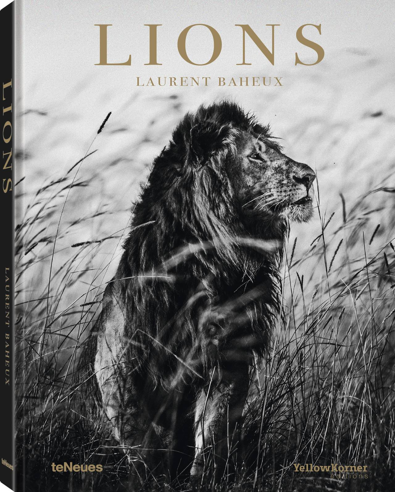 © Lions by Laurent Baheux, published by teNeues, www.teneues.com, Lion in the grass I, Kenya 2013, Photo © 2019 Laurent Baheux. All rights reserved.