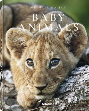 © Baby Animals by Michael Poliza, published by teNeues, www.teneues.com, Lion cub, Savuti region, Botswana, Photo © 2018 Michael Poliza. All rights reserved. www.michaelpoliza.com